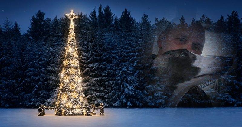 wir w nschen frohe weihnachten bellesvite whippets. Black Bedroom Furniture Sets. Home Design Ideas